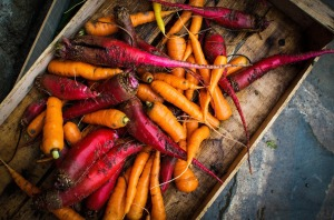 nutrition - orange veg